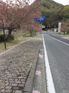 2018年4月7日みやま公園桜の様子その2