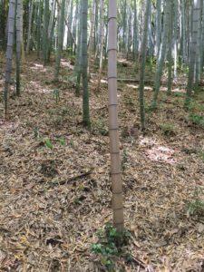 竹やぶの様子