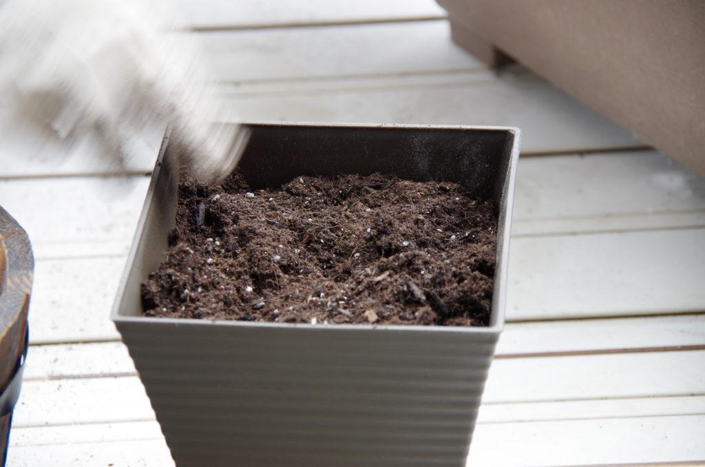 角ポットに培養土を入れる様子