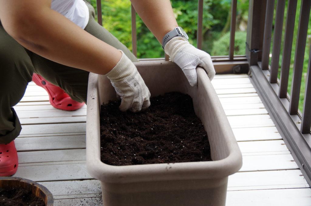 プランターに培養土をいる様子
