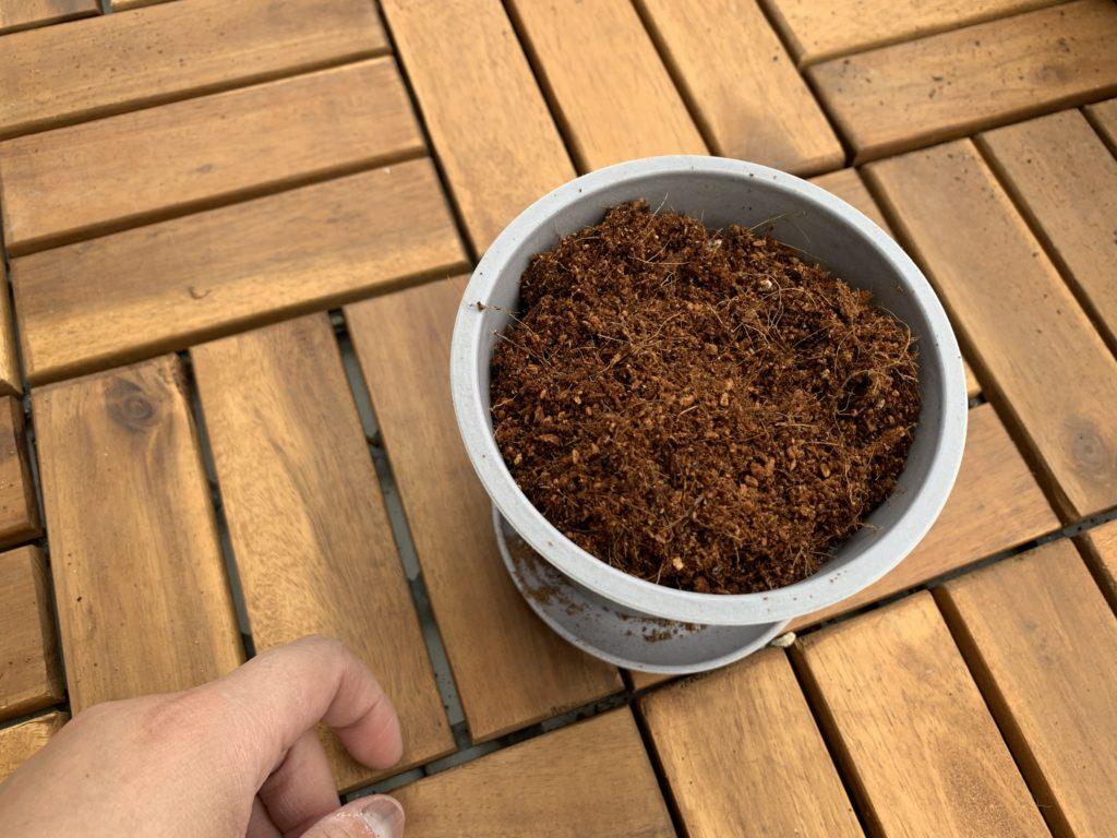 ポットに入れたダイソーかる~い花と野菜の元肥入培養土