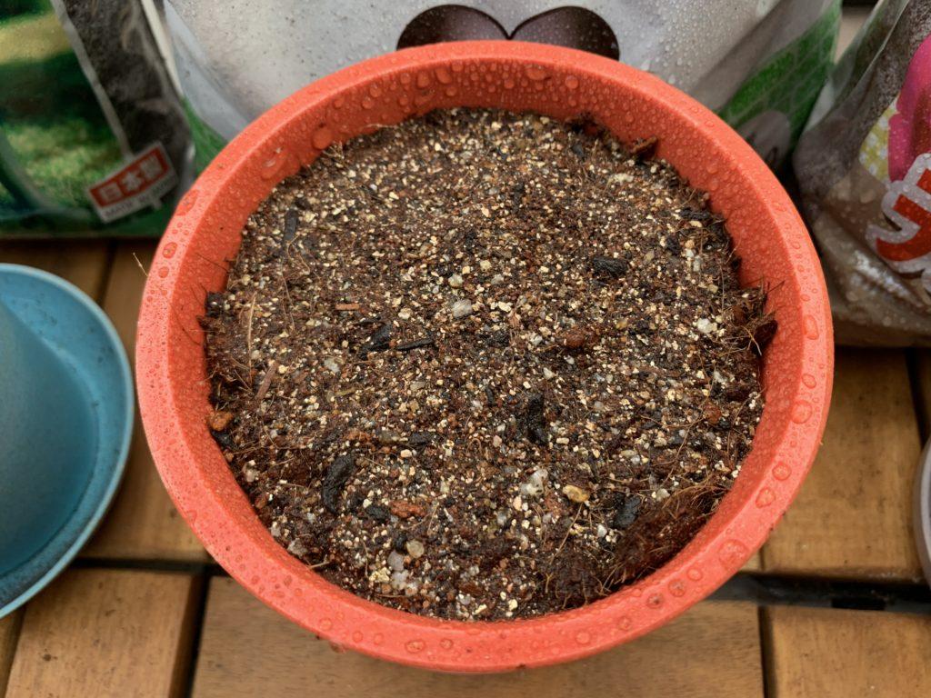 しっかりと水をあげた野菜のタネを植えたポット