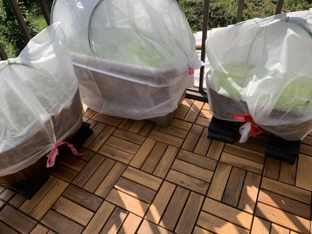 不織布の防寒カバーをかけたプランター菜園