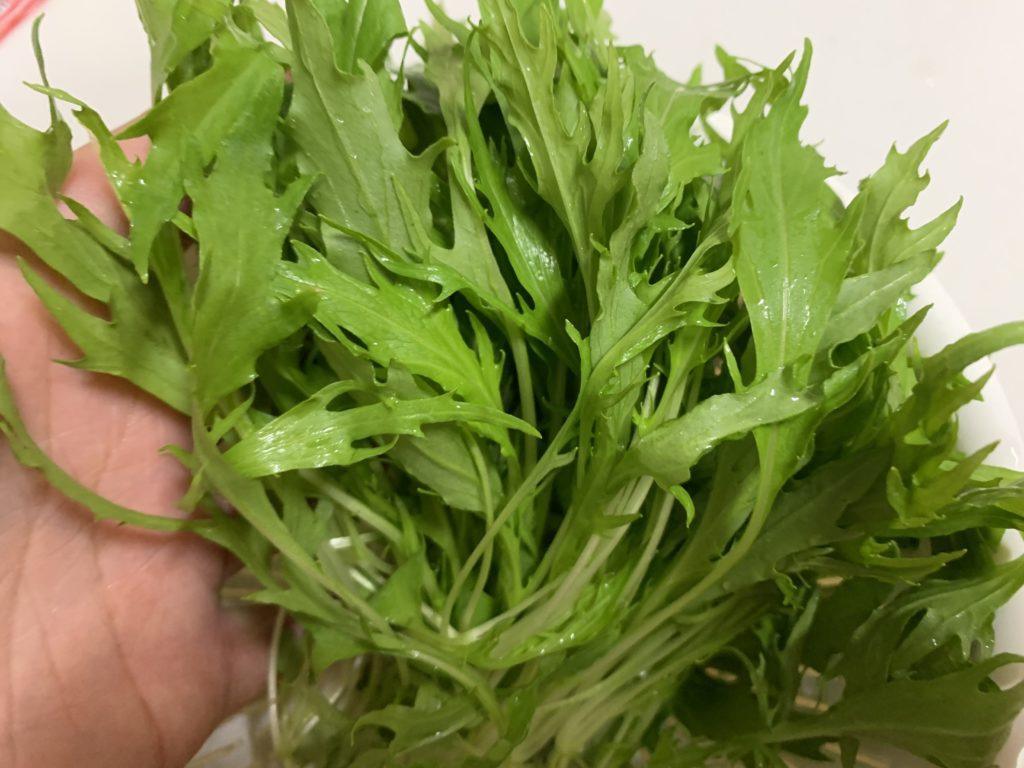 お水で洗った収穫したばかりのサラダ水菜