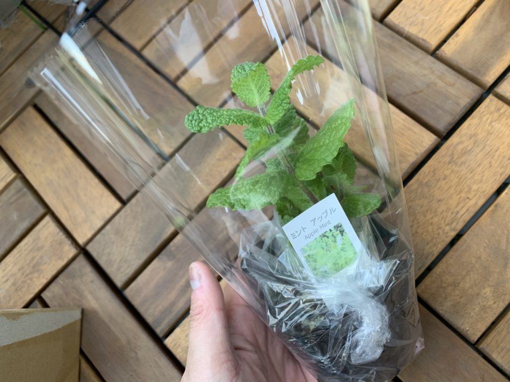 ビニールで丁寧に梱包されたアップルミントの苗