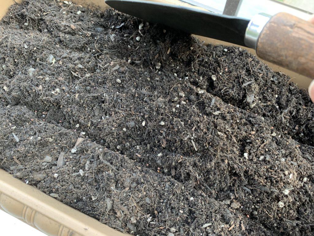 スコップを使って優しく土をかぶせる様子