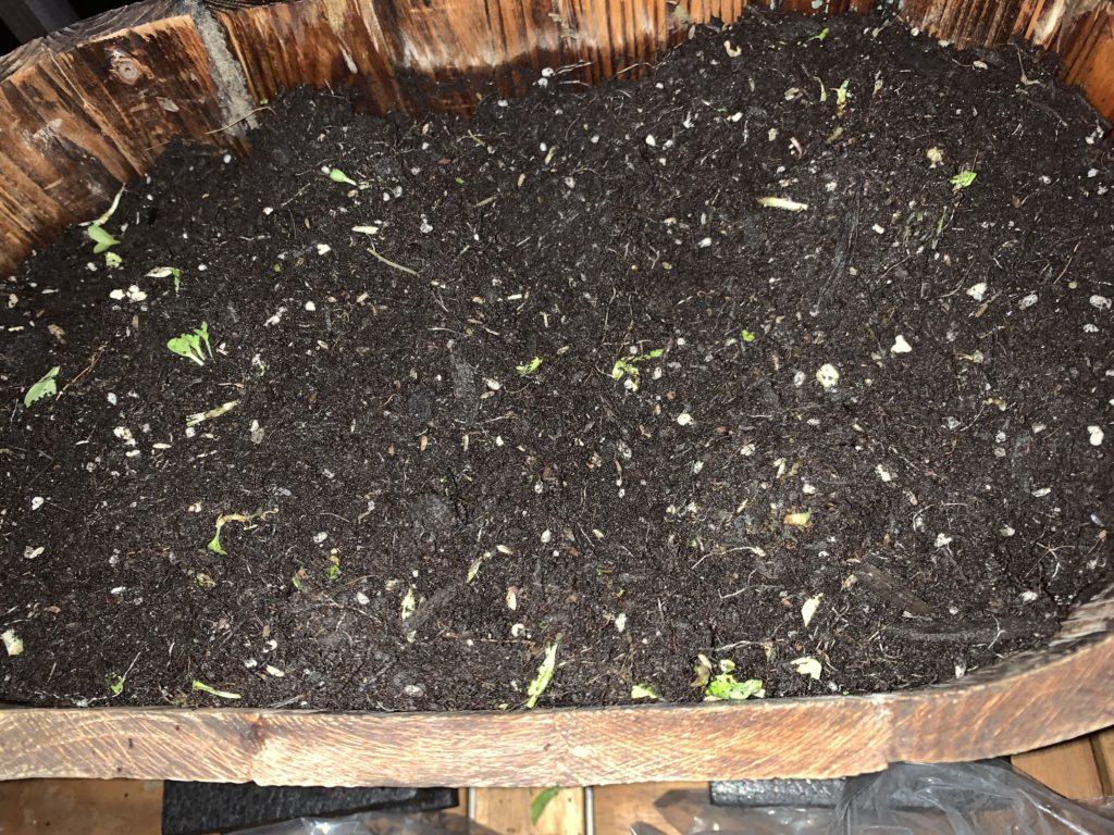根っこなどをキレイに取り除いたプランターの中の培養土