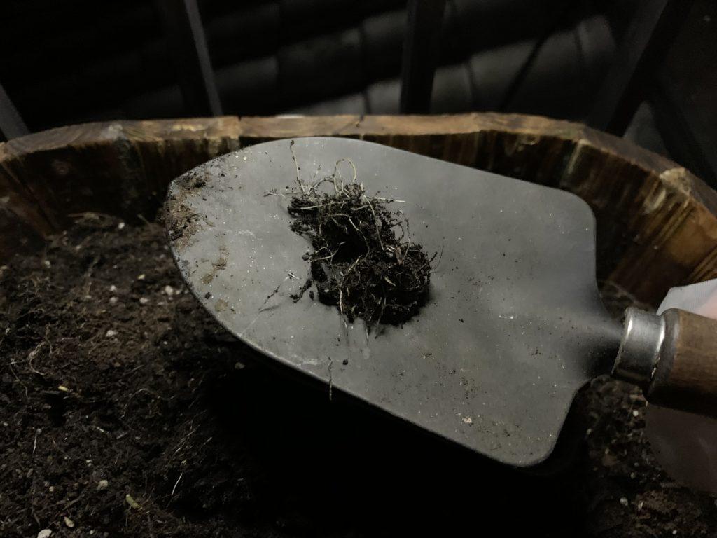 スコップの上に乗せた野菜の根っこ