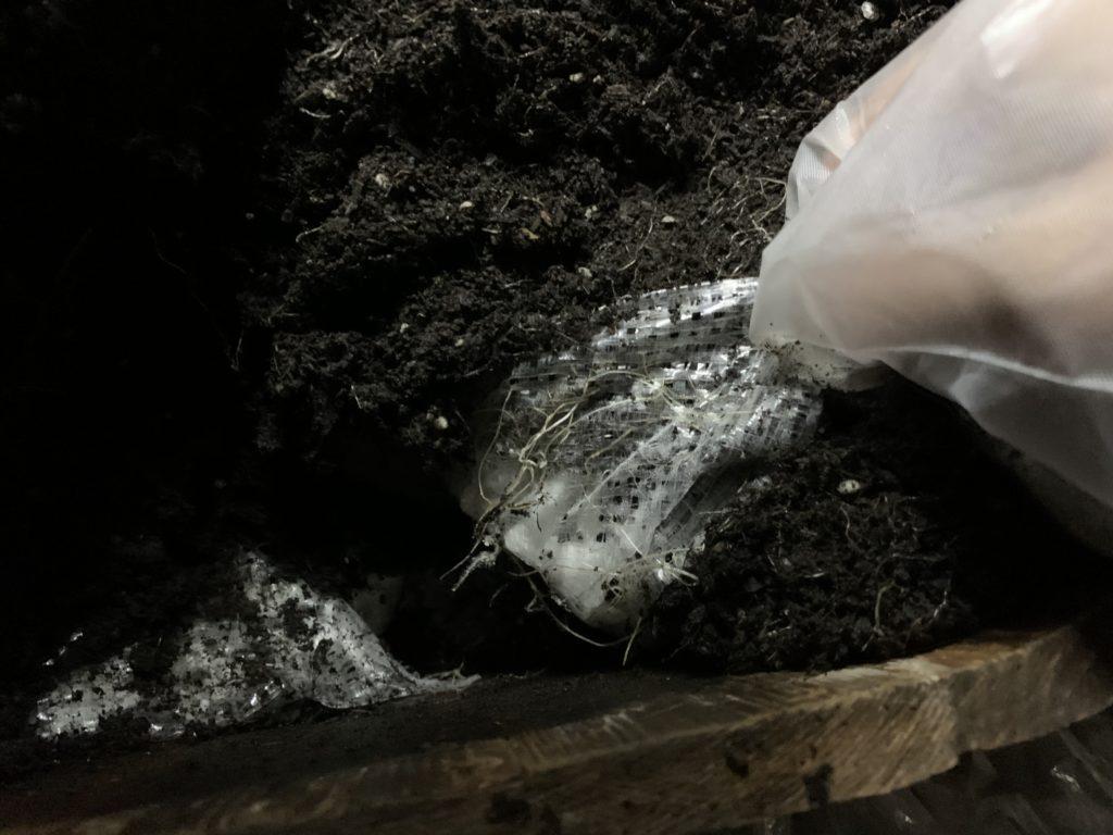 鉢底石のネットの中にも入った野菜の根っこ