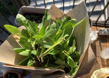 どっさり採れた間引き菜の花束