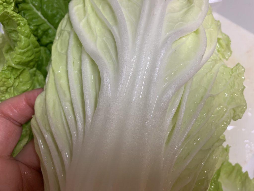 葉っぱを水洗いした白菜