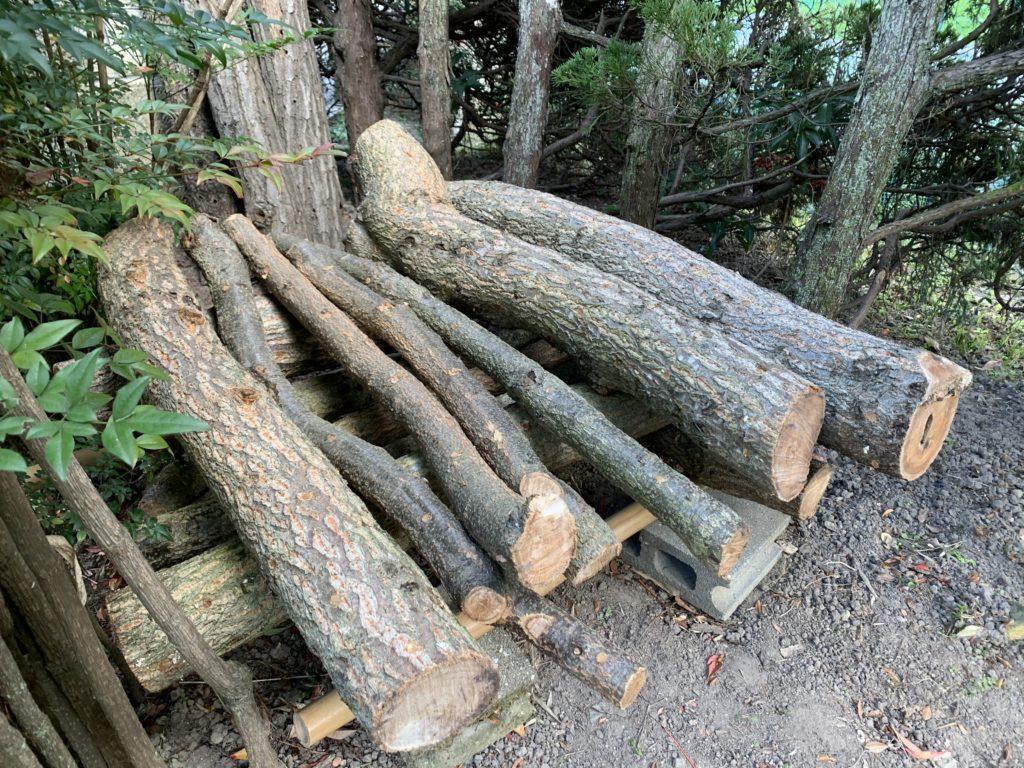 しいたけの種駒を打ち込んだ原木を日かげに置く様子