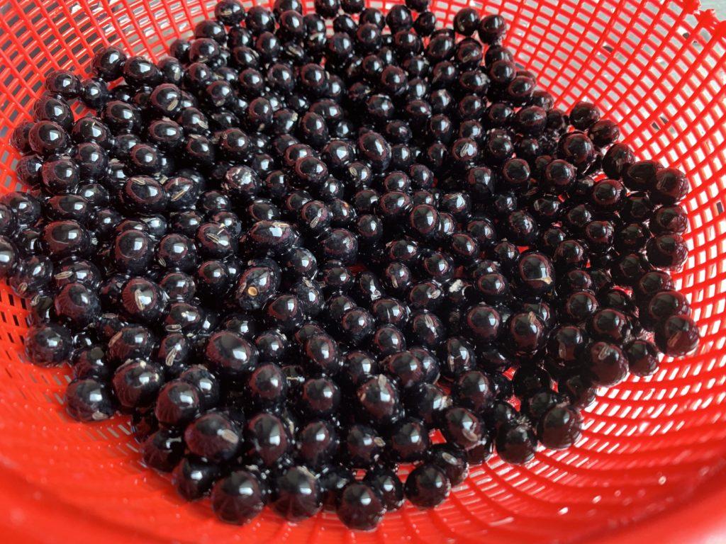 ピッカピカの自家製黒豆
