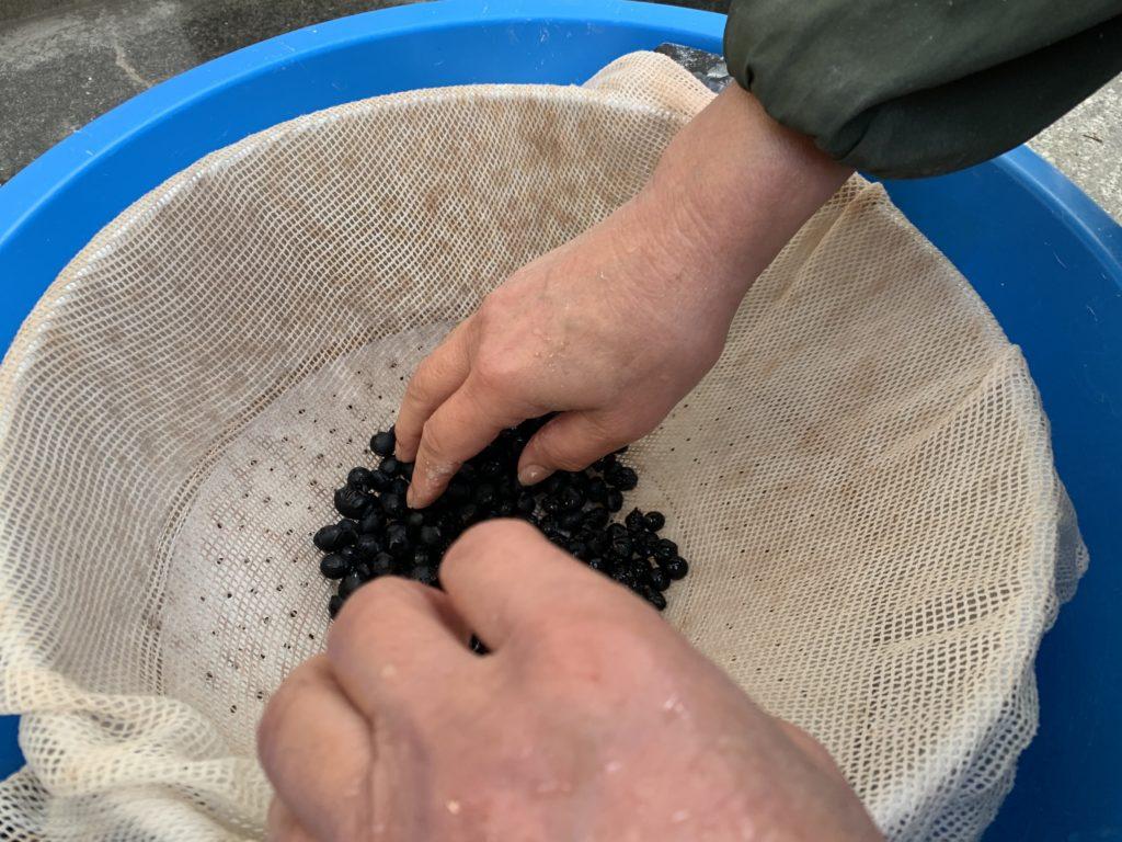 蒸し器の最初に入れる黒豆