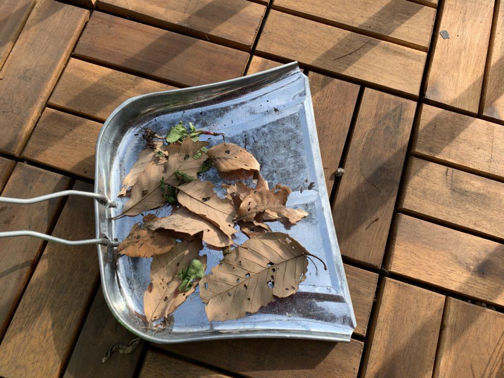 ちりとりいっぱいに取れた落ち葉や土などのごみ