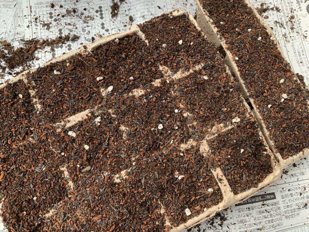 ごぼうのタネの上からうっすらと培養土をかけた様子