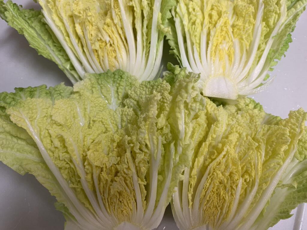 プランターで栽培した白菜を半分に切った様子